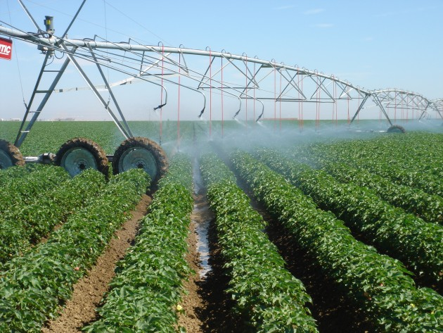 Photo of Pesticides linked to greater autism risk