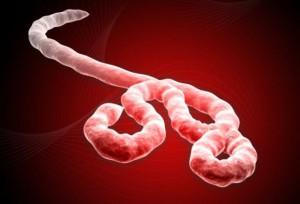 ebola-image2