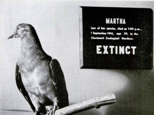Photo of Climate change isn't new, and extinction is forever