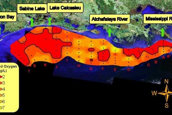 Map of the dead zone created by NOAA.