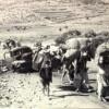 Palestinian_refugees_1948-1