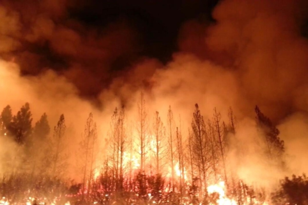 U.S. Forest Service photo.