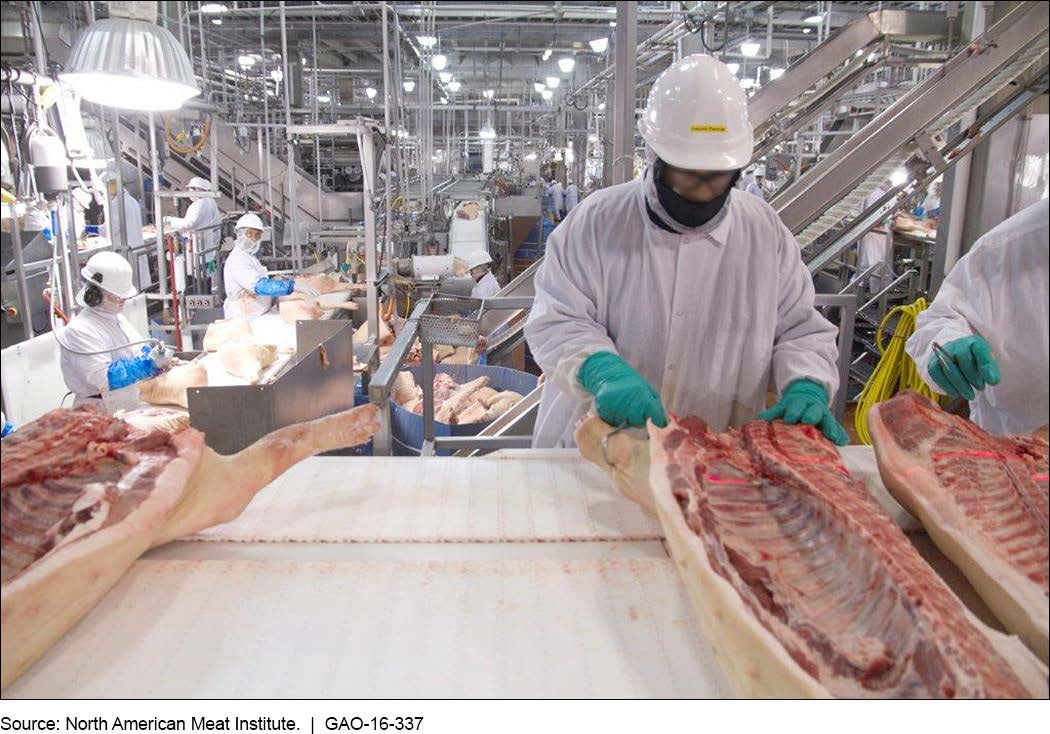 Photo of Trump administration wages war on meatpacking industry workers