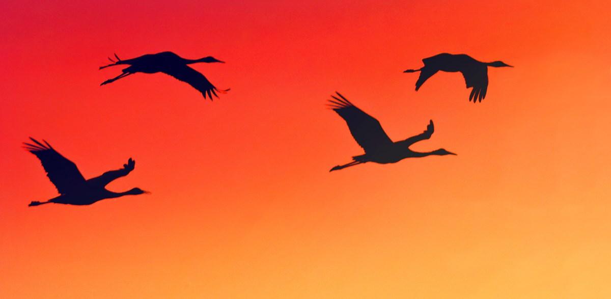Trump policies kill birds: Why it matters