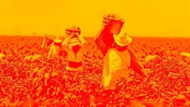 Photo of Urgent: Farmworkers threatened with pay cuts while crops destroyed