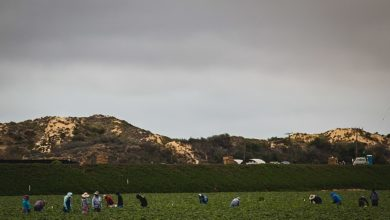 Photo of Farm workers' lives on the line as California burns