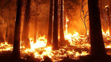 Photo of One in ten residents of Oregon forced to flee enormous wildfires