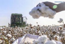 Photo of Chinese people boycott the Xinjiang cotton boycotters
